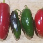 Jalapeno Pepper (green and red)