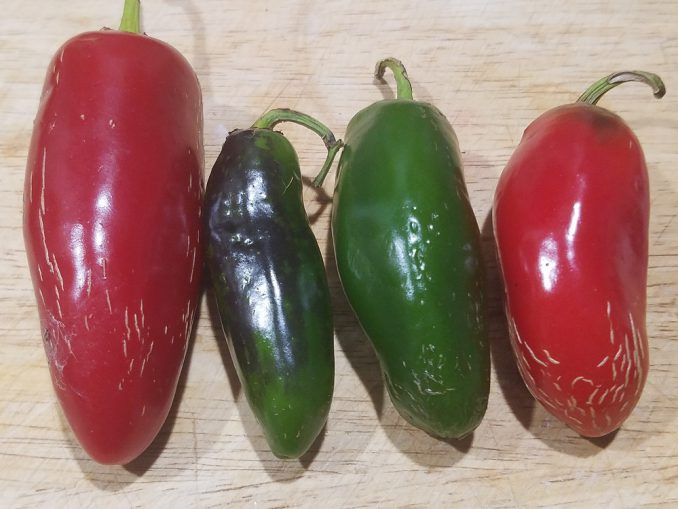 Red and Green Jalapeno Peppers