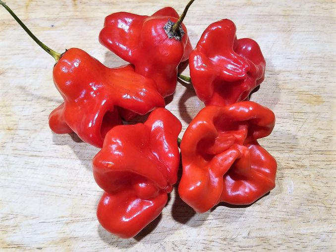 Mad Hatter Sweet Peppers